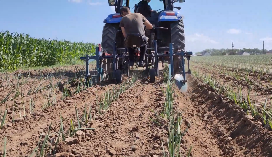 Démonstration d'alternatives aux herbicides en cultures légumières à Cléder